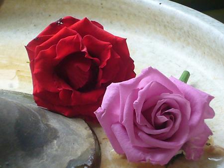 兩朵玫瑰花