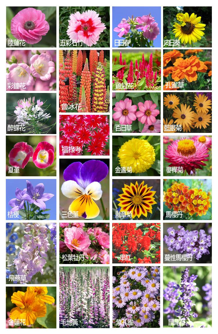 四季草花名錄
