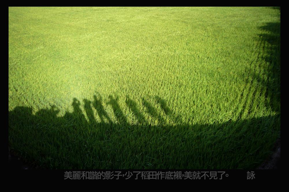 很美的影子在稻田--麗詠